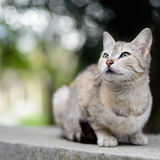 Cat sitting outdoors Royalty Free Stock Images