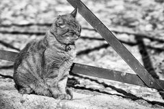 Cat sitting outside Stock Images