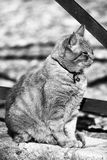 Cat sitting outside Royalty Free Stock Photography