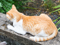 Cat sitting outside Royalty Free Stock Photos