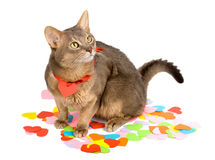 Cat sitting on paper hearts Stock Photos