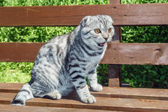 Cat sitting on a park bench Royalty Free Stock Photos