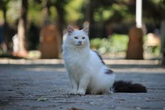 Cat is sitting in park. White beautiful lady Stock Photos