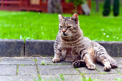 Cat sitting on paved walk Stock Photos
