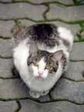 Cat sitting on pavement and looking upwards Royalty Free Stock Photos