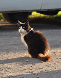 Cat sitting on the pavement near the car Royalty Free Stock Photography