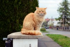 Cat sitting on a pole Stock Images