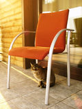 Cat is sitting on porch in the summer day Stock Image