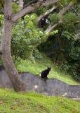 Cat Sitting preta na parede de retenção Foto de Stock Royalty Free