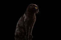 Cat Sitting preta no espelho e na vista mal-humorada Fotografia de Stock Royalty Free