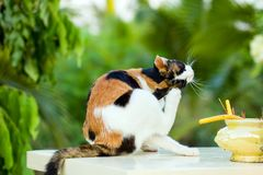 Cat sitting relaxed on white marble table stock photo
