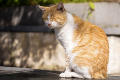 Cat sitting and relaxing outdoor Stock Images