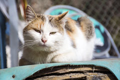 Cat sitting and relaxing outdoor. White cat sitting and relaxing outdoor Stock Photo