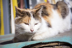 Cat sitting and relaxing outdoor. White cat sitting and relaxing outdoor Royalty Free Stock Images