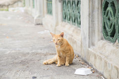 Cat sitting and relaxing on the street Royalty Free Stock Images