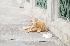 Cat sitting and relaxing on the street Stock Photography