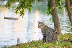 Cat sitting by the river Stock Images