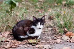 Cat sitting on the road Stock Photography