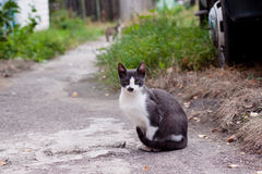 Cat sitting on the road Stock Photos