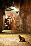 Cat sitting on the road. Old town Jaffa street in the evening. Stock Images