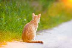 Cat sitting on the road Royalty Free Stock Image