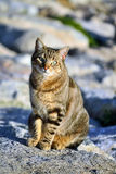 Cat. Cat sitting on the rocks Royalty Free Stock Photo
