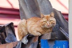 Cat Sitting On roja una cerca y mirada de la cámara Foto de archivo