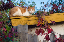Cat sitting on the roof Royalty Free Stock Photos