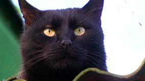 Cat sitting on the roof. Black cat sitting on the old roof and looks. Close-up shooting stock video footage