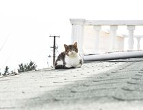 Cat sitting on roof royalty free stock photography