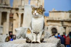The cat is sitting on the ruins Stock Images