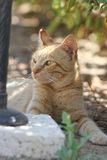 The cat is sitting in the shade. The red cat is sitting in the shade Stock Photography