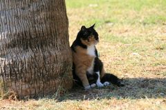 Cat sitting in the shade of a tree stock image