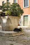 Cat sitting in the shade of a well in Venice, Italy Royalty Free Stock Photography