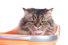 Cat sitting in shopping basket Stock Photo