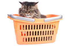 Cat sitting in shopping basket Stock Images