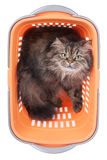 Cat sitting in shopping basket over white Royalty Free Stock Photo
