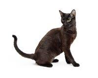 Cat Sitting Side Full Length negra Fotografía de archivo libre de regalías