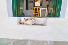 Cat sitting Sifnos Greece royalty free stock images
