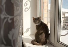 Cat sitting on the sill Stock Images