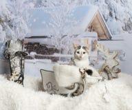 Cat sitting in sleigh in winter scene, portrait. Cat sitting in sleigh, winter scene, portrait Royalty Free Stock Photos