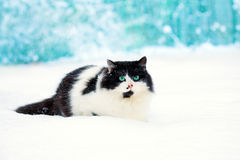 Cat sitting in the snow Stock Photos