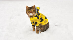 The cat in a yellow cotton-padded jacket sat in the snow