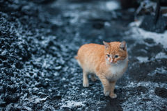 Cat sitting on snow and looks. Royalty Free Stock Images