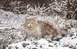 Cat sitting on snow and looks. Stock Images