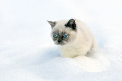 Cat sitting in snow Royalty Free Stock Photography