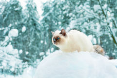 Cat sitting in snow Stock Photography