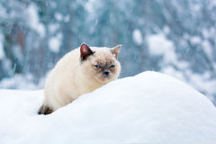 Cat sitting in snow Royalty Free Stock Images