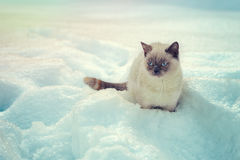 Cat sitting in snow Stock Photo