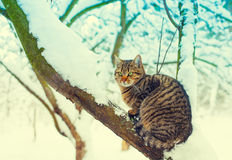 Cat sitting on the snowy tree Royalty Free Stock Images